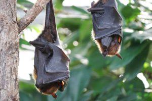 bats in property development