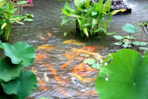 fish-pond-chattels-fixtures-commercial-property